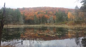 Breakneck Pond in the Nipmuck State Forest. A very natural place in The Last Green Valley. Photo by D. Geslien.