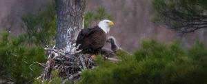 The Last Green Valley's Member Program Series: Bald Eagles in The Last Green Valley