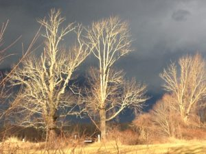 Trees painted by the sun just before rain. Life and weather are ever-changing in The Last Green Valley. Photo by E. Nelson.