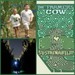 The Farmer's Cow Corn Maze Adventure