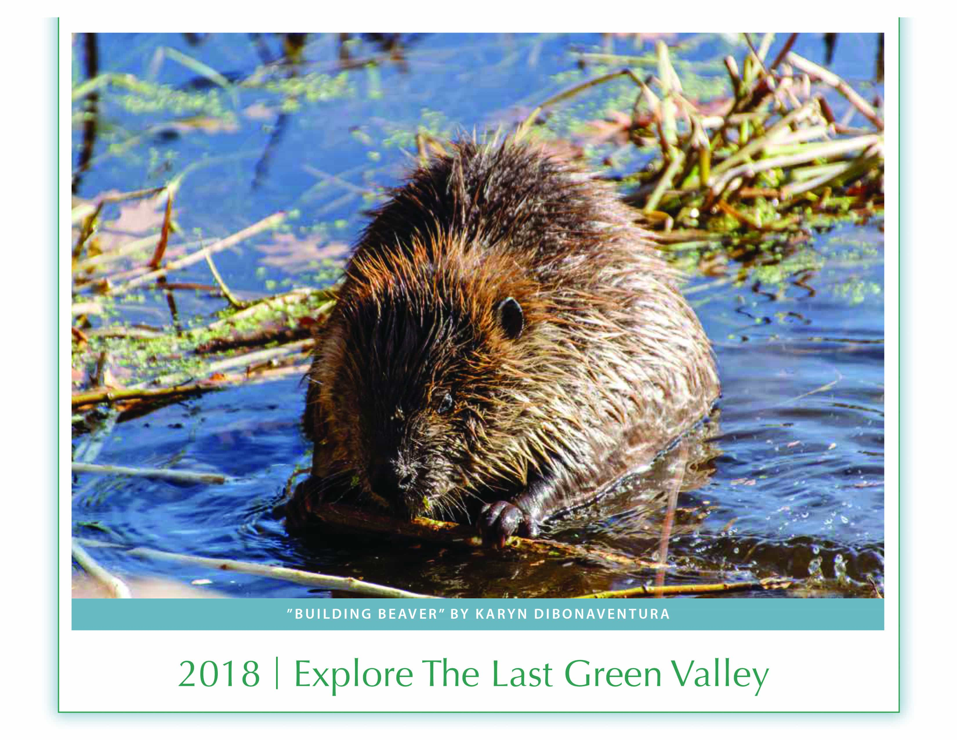 Explore The Last Green Valley Discovering the