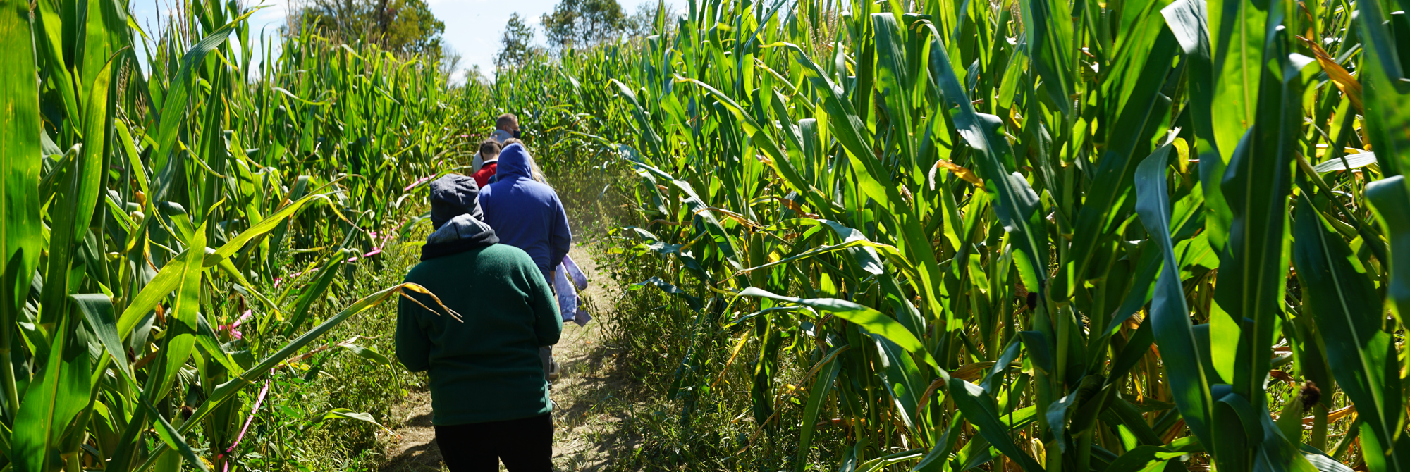 Ekonk Hill Corn Maze