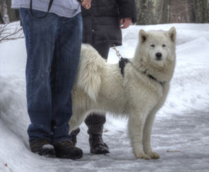 winterdog-AIamartino
