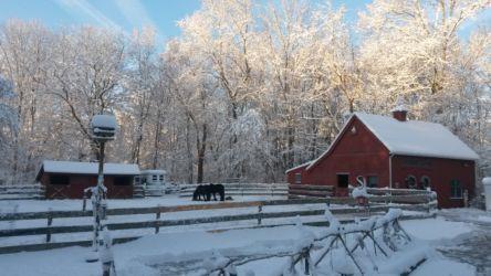 D Kennedy-Wolf-Den-Farm in snow-March 2016-Brooklyn