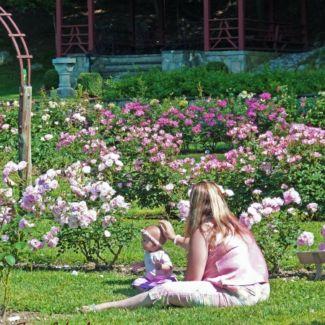 Norwich_Rose_Garden
