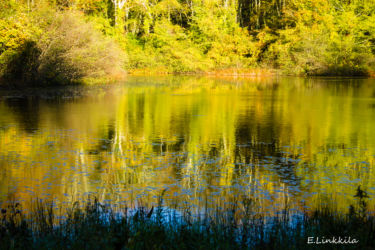 e-linkkila-trail-woods-reflection-october-2016-hampton