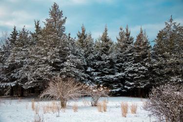 E Linkkila after the snow-February 2017-Hampton